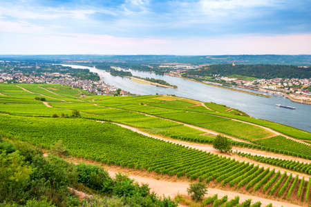 Aerial view of The River Rhine valley with large massives of vineyards alongside. Zdjęcie Seryjne - 151351509