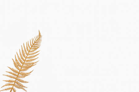 Golden fern leaf over white background. Copy space.