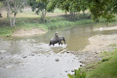 spacial: Trekking Elephant Cross the River