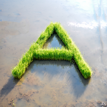 Alphabet letter from rice plant