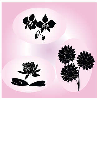 silhouette the sweet beatiful flower