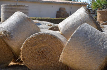 dry grass rolled up in a roll to animal feed, round hay bale