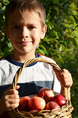 A young country boy is eating an apple on an apple or farm. child kid eat fruit outdoor Stock Photo