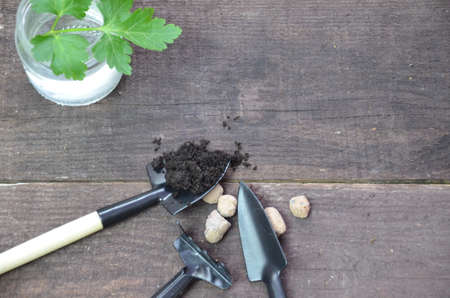 Gardening. Garden tools and a pot of plant on a wooden table. To work in the garden, spring planting plants. green sprout seeds