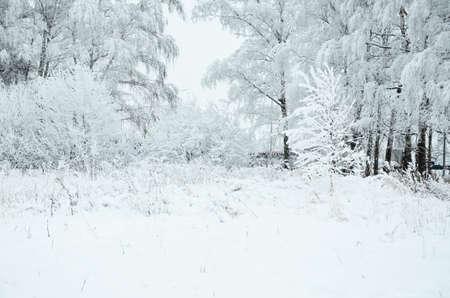 Trees with snow in winter park Zdjęcie Seryjne