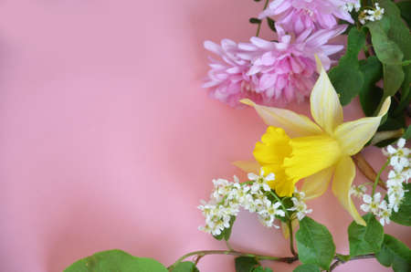 Beautiful spring flowers or sommer white of apple or bird cherry, daffodil, lilac or purple aster on a pink background. save the space. top view Zdjęcie Seryjne