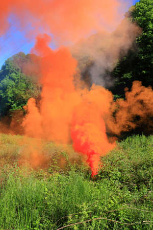 volumes: Volumes of orange smoke above a forest glade in a clear sun day