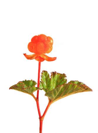 chicout�: Orange chicout� CU sur un fond blanc Banque d'images