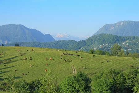 コーカサス山脈の麓の豊富な牧草地 写真素材