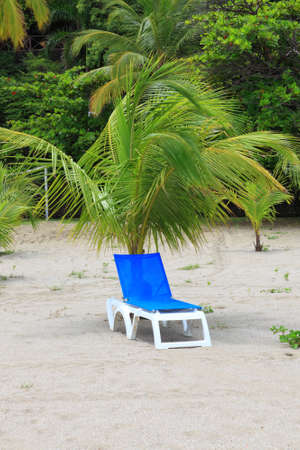 deck chairs: deck chairs under palm tree