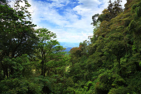 tropical forest of the Central America 写真素材