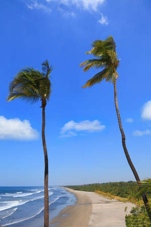 coconut palms on the background of the coast of the Pacific ocean
