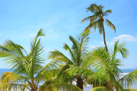 coconut palms on the background of the ocean and blue sky