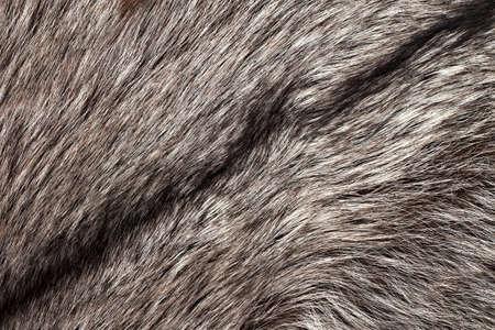 silver fox: Textura de pieles de zorro plateado como fondo horizontal Foto de archivo