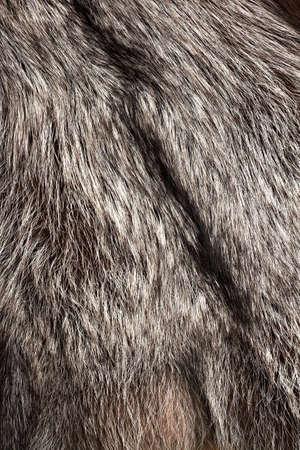 silver fox: Textura de pieles de zorro plateado como fondo vertical Foto de archivo