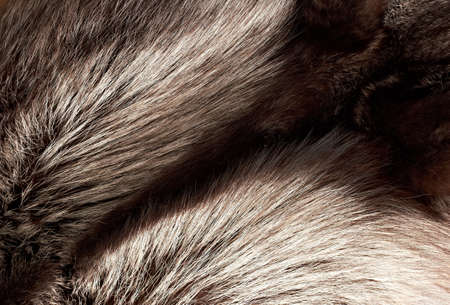 silver fox: Silver fox fur texture as horizontal background