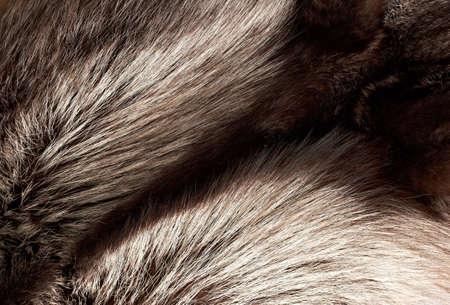 silver fox: Textura de piel de zorro plateado de fondo horizontal
