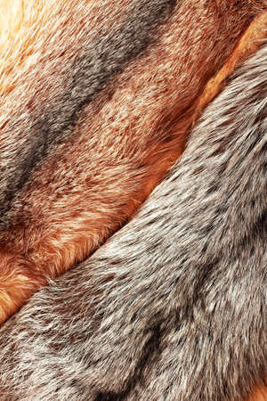 silver fox: Combined silver and red fox fur vertical background Stock Photo