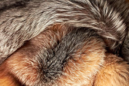 peltry: Combined silver and red fox fur horizontal background Stock Photo