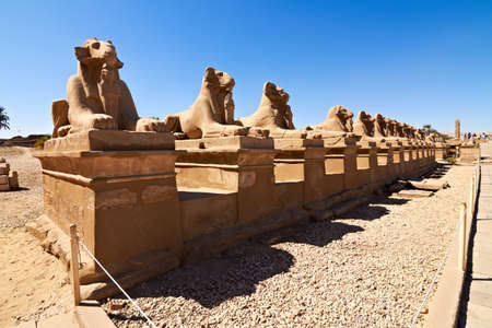 Alley of ram-headed sphinxes in front of Karnak temple,Egypt photo