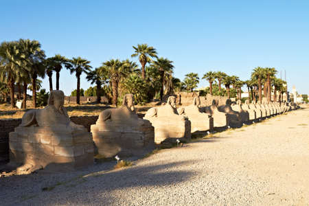 thebes: Row of Sphinx statues lining the route into Luxor Temple, formerly Thebes, in Egypt Stock Photo