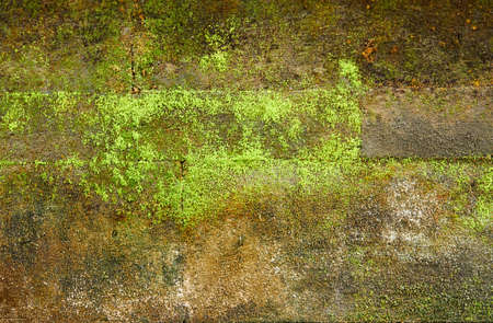 Old brick wall covered with moss for background photo