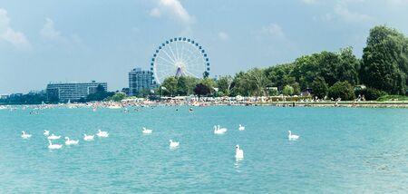 balaton: Swan flock on the Balaton lake in Siofok with Ferris wheel in the background
