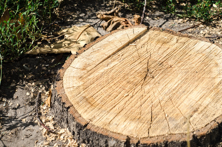 truncated: Background of truncated circle tree