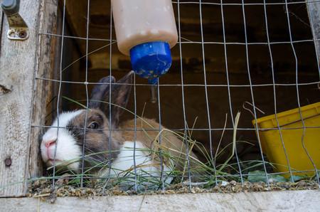 rabbit cage: Coniglio grigio in gabbia su una giornata di sole Archivio Fotografico