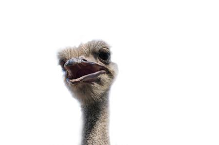 Ostrich head close up isolé sur blanc Banque d'images