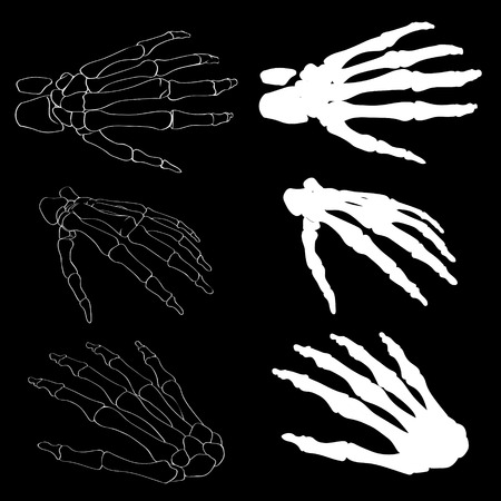 Human hand bones anatomy isolated vector illustration. Black and white hand bones for medical or Halloween design. Human hand bones skeleton silhouette collection set. Realistic hand bones EPS 10.