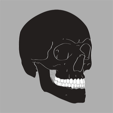 Realistic Hand Drawn Vector Skull on gray background. Human Skull Vector Illustration for medical, Halloween or tattoo design. Ilustracja