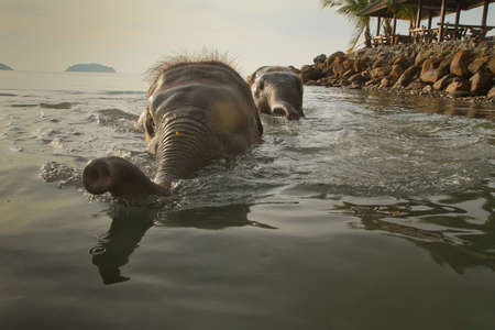 Bathing elephants in the sea  photo