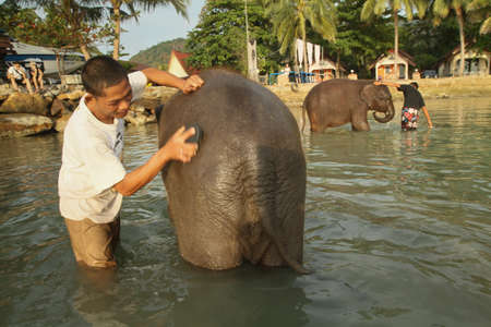 practically: KO CHANG, THAILAND - DECEMBER 22:  Bathing elephants in the sea on December 22, 2011 on Ko Chang, Thailand. Nowadays, cheap agricultural machinery practically superseded the elephants from the Thai countryside, but by the development of the tourism indust