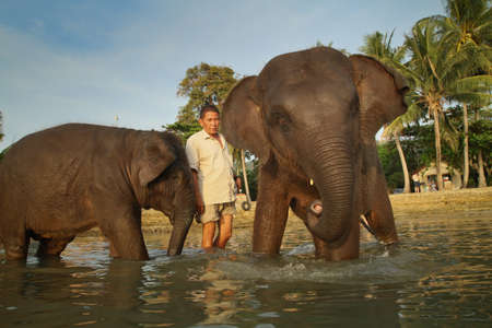 Ko Chang, Thailand - December 22, 2011: Bathing the elephant in the Gulf of Siam.