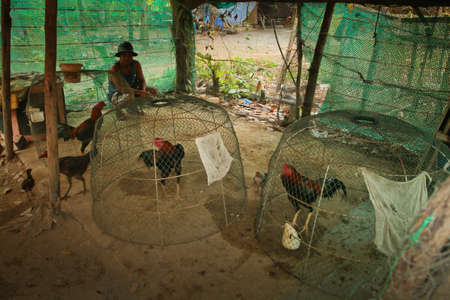 KO CHANG, TRAT/THAILAND - JANUARY 3:  Place for traditional cockfighting competitions in the Thai countryside on January 3, 2012 on Ko Chang, Thailand. Cockfighting is now illegal in the Thailand.   Stock Photo - 11868361