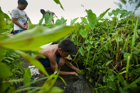 primitivism: BALI, INDONESIA - MARCH 31: Unidentified poor children catch small fish in a ditch near a rice field on March 31, 2012 on Bali, Indonesia.