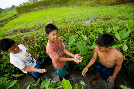 BALI, INDONESIA - MARCH 31: Unidentified poor children catch small fish in a ditch near a rice field on March 31, 2012 on Bali, Indonesia.