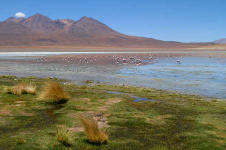 Flamingos on lake in Andes, the southern part of Bolivia Stock Photo - 13133065