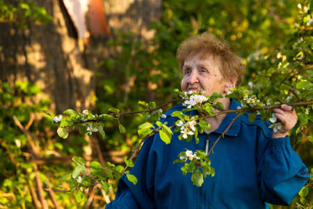 80 85: An elderly woman  85 years old  in a tracksuit standing in the park and smelling the flowers of apple  the symbol of healthy lifestyle  Stock Photo