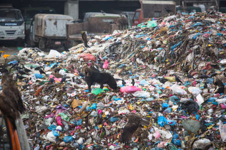adequate: KATHMANDU, NEPAL - DEC 19, 2013: Pile of domestic garbage at landfills. Only 35% population of Nepal have access to adequate sanitation.