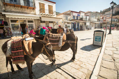 HYDRA, GREECE - MAY 7, 2014:Donkey at the Greek island, Hydra. They are the only means of transport on the island, no cars are allowed.