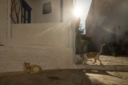 HYDRA, GREECE - MAY 7, 2014: Old traditional street of Hydra island. Donkeys are the only means of transport on the island, no cars are allowed.