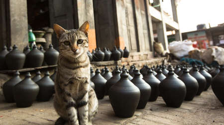 rotates: BHAKTAPUR, NEPAL - CIRCA DEC, 2013: Cat in Nepalese pottery workshop. More 100 cultural groups have created an image Bhaktapur as Capital of Nepal Arts. Editorial