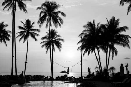 trees photography: Silhouettes of palm trees on a tropical beach, black and white photography.