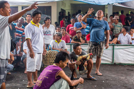 cockfighting: UBUD, BALI INDONESIA - FEB 22, 2016: Locals during traditional cockfighting. All forms of gambling, including gambling within secular cockfighting, were made illegal in 1981 by Indonesian government.