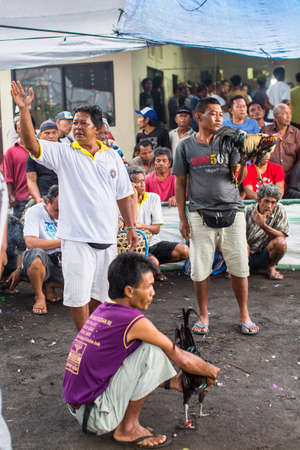 cockfighting: UBUD, INDONESIA - FEB 22, 2016: Locals during traditional cockfighting. Cockfighting is a very old tradition in Bali and religious aspects of cockfighting within Balinese Hinduism remain protected.