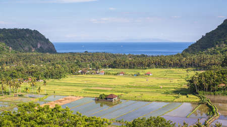 tegalalang: Panorama of valley with rice fields, on Indian ocean background, Bali island, Indonesia. Stock Photo