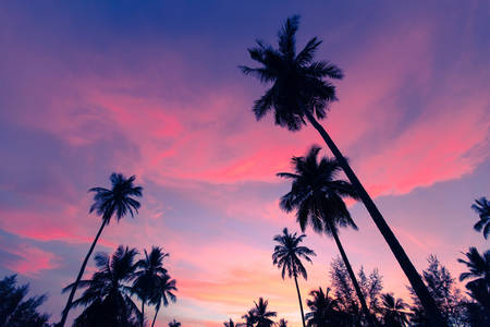 sharply: Coconut palms, sharply silhouetted against tropical sunset in Thailand. Palms trees on sky background.
