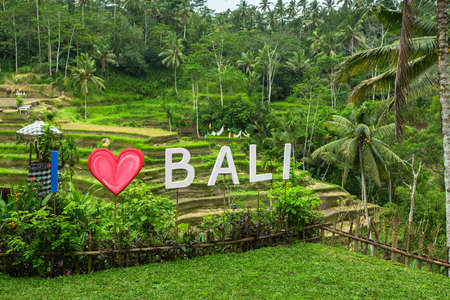 tegalalang: I Love Bali text written on the green rice terraces.